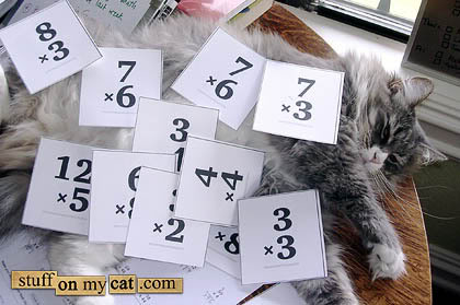 flashcard-cat