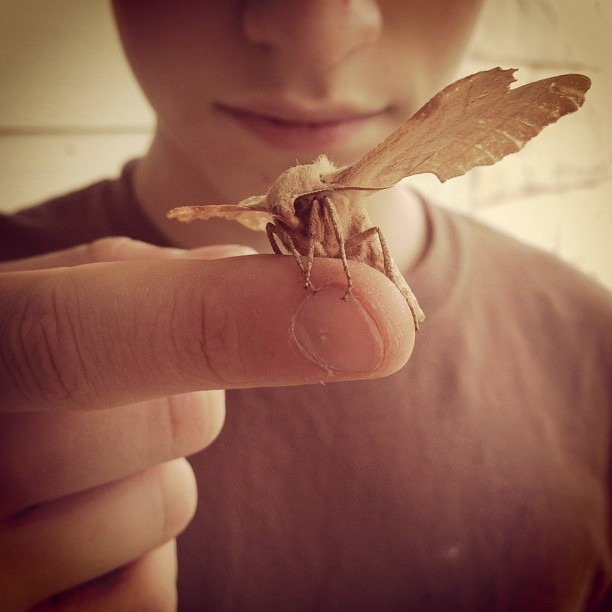 Broken, but Beautiful #moth #insect #boy #wings #brown #jj #igtexas