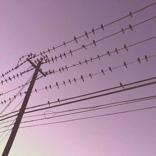 Bird Convention #birds #sky #silhouettes #wires #purple