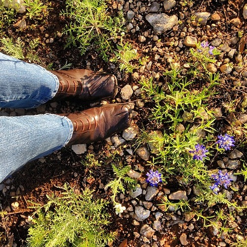 Bluebonnets & Brown Lace-up Boots (and might I just add that it forever irks me that the iPhone doesn't have a cowgirl hat, state of Texas shape, or boot icon?!)