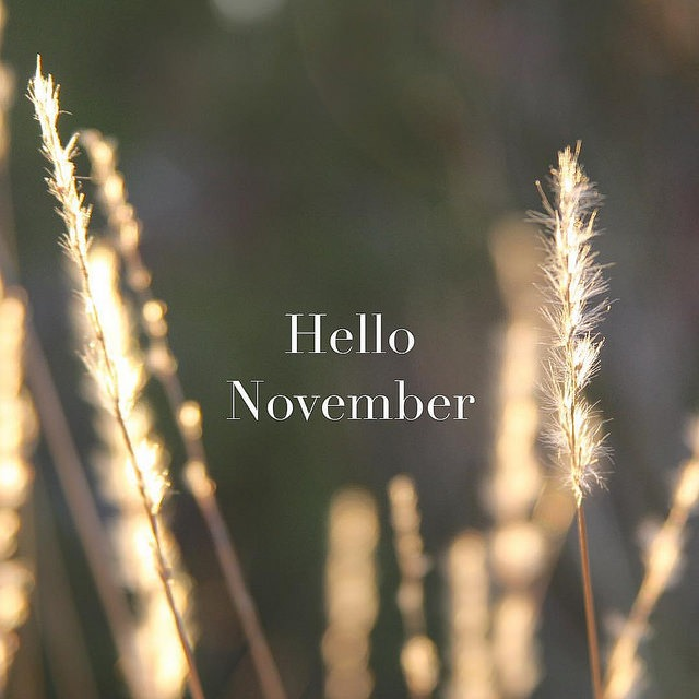 Hello November via @sprittibee