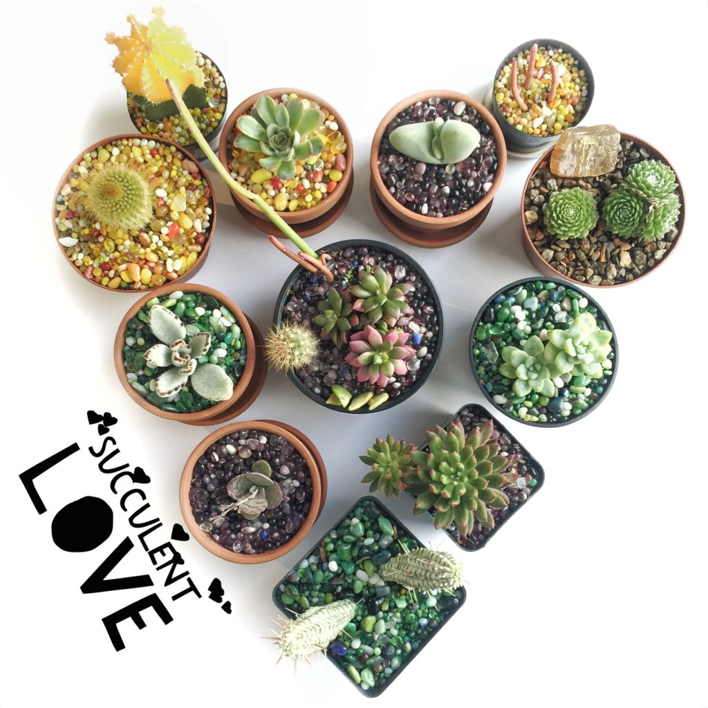 Succulent Heart by @sprittibee