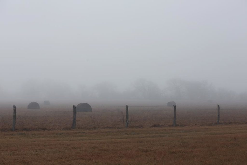 Foggy Morning at the Farm @sprittibee