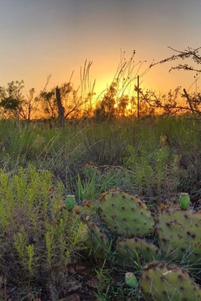 west texas sunset @sprittibee
