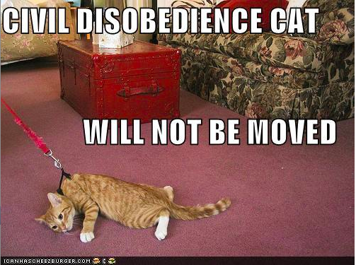 Civil Disobedience Cat